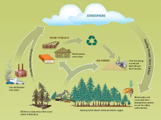 Environmental benefits of timber frame
